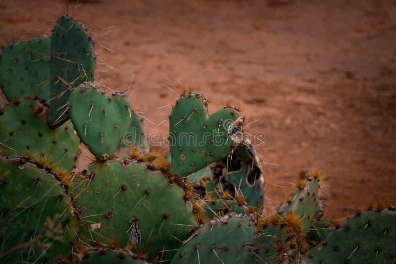Heart Cacti stock photos