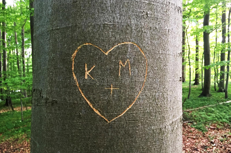 Heart carved in Tree royalty free stock image