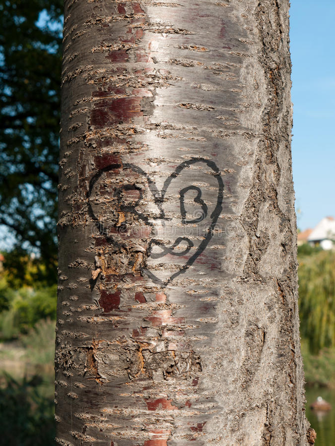 Heart carved into a tree royalty free stock image