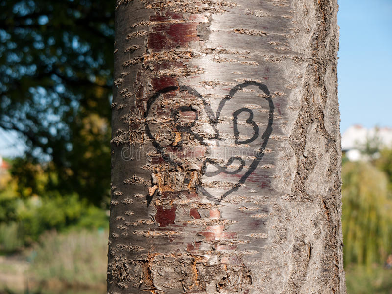 Heart carved into a tree royalty free stock photography