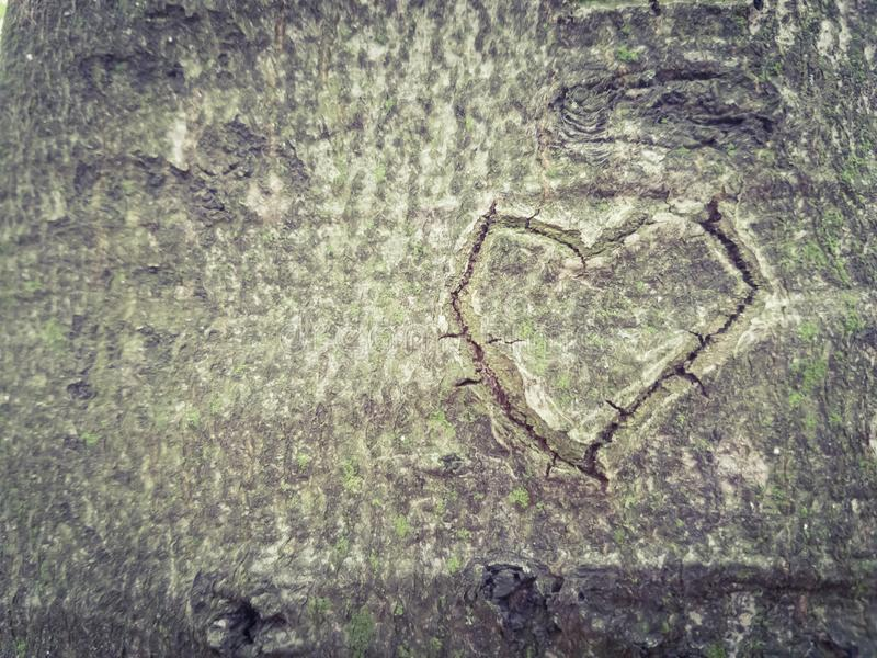 Heart carved on a tree trunk. Love, together, forever, garden, park royalty free stock image