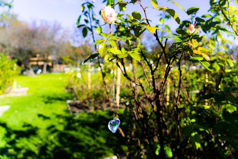 Heart crystal glass refract sunlight - rose garden background. AT 1/4/2019 in Rose garden stock image