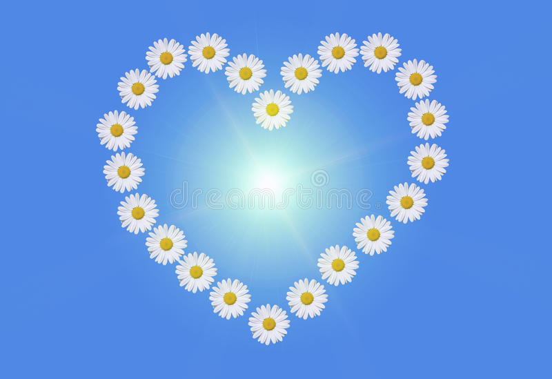 Heart and daisies royalty free stock photo