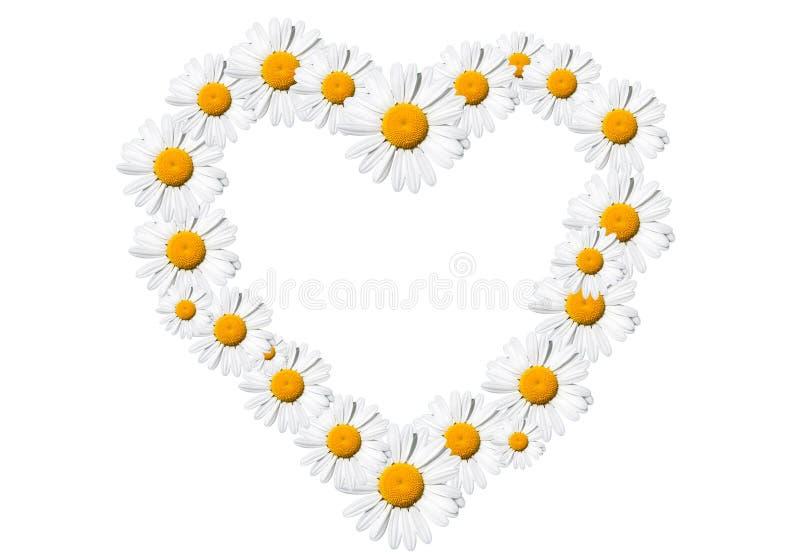 Heart of daisies stock photos