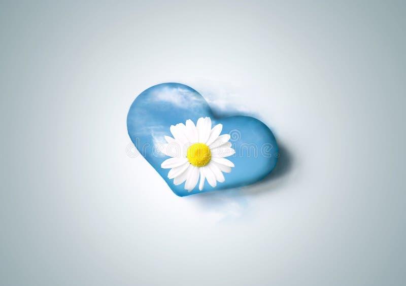 Heart Daisy Flower stock photo