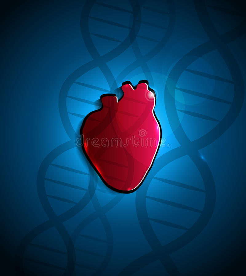 Heart And DNA Stock Photo