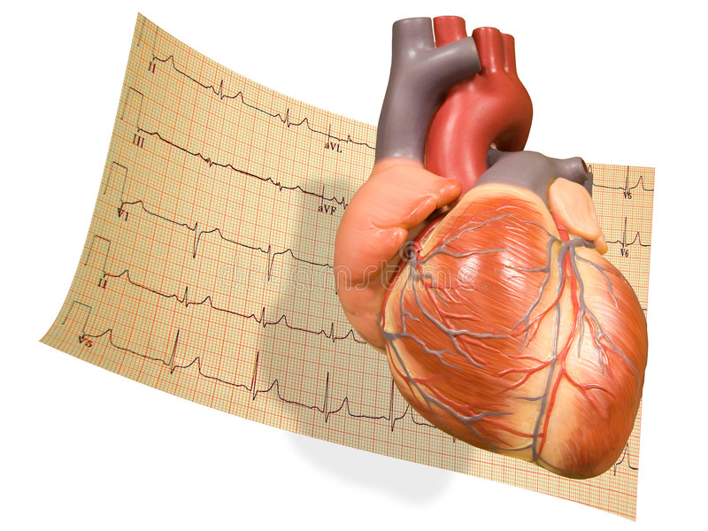 Heart with EKG. A model of the heart with a white background and an EKG scan or read-out