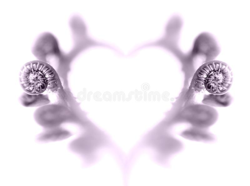 A Heart of Ferns royalty free stock images