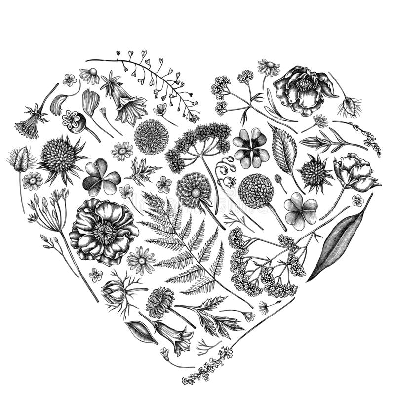Free Heart Floral Design With Black And White Shepherd`s Purse, Heather, Fern, Wild Garlic, Clover, Globethistle, Gentiana Stock Photo - 163045170