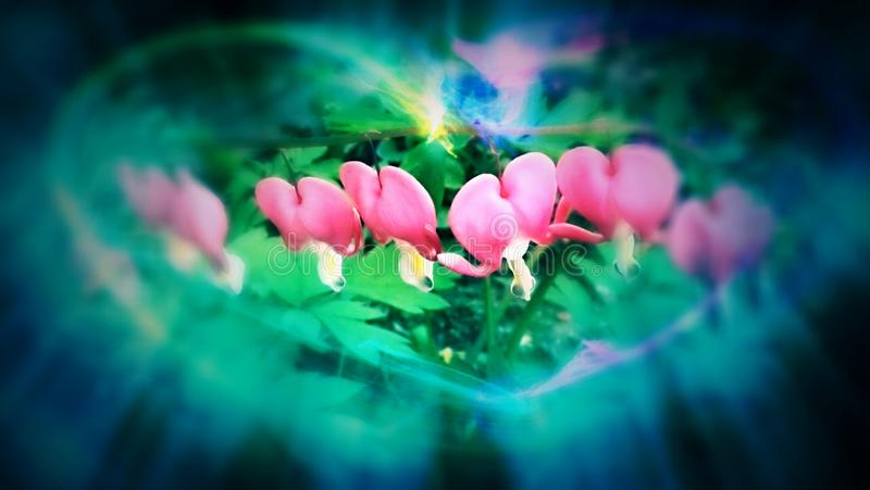 Heart flower. Abstrac pink flower stock images