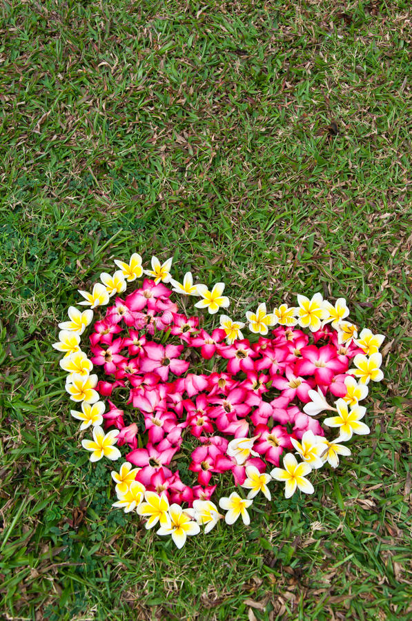 Download Heart flower on yard stock photo. Image of football, health - 18519616