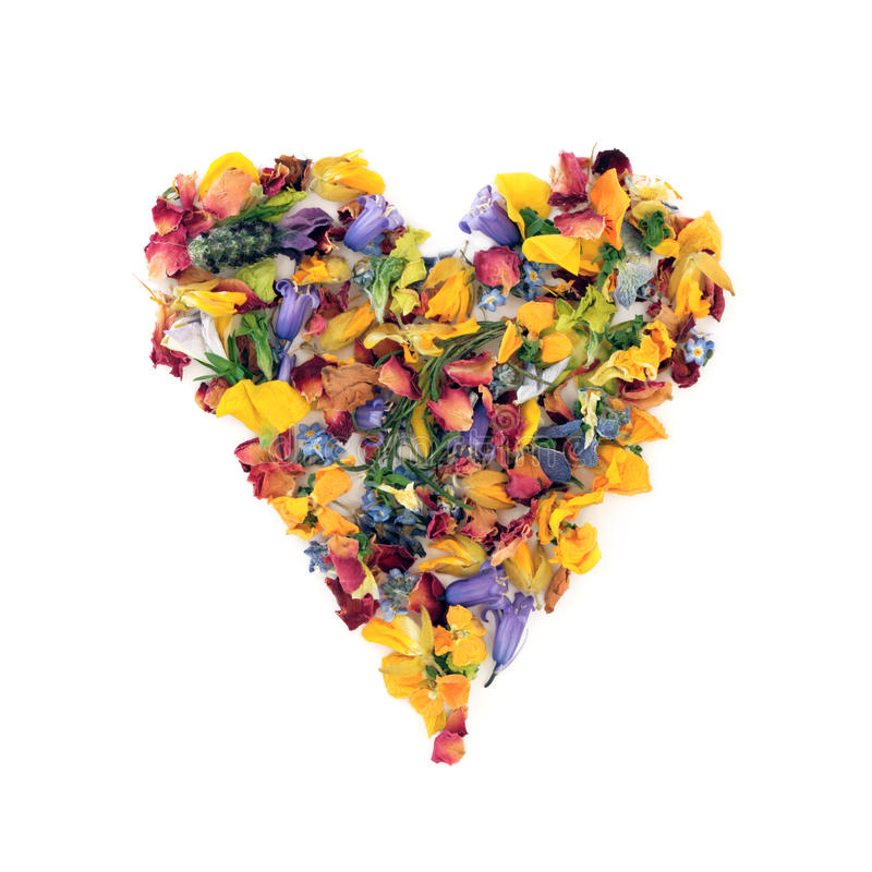 Heart of Flowers. Heart of various dried flowers and herbs over white background royalty free stock image