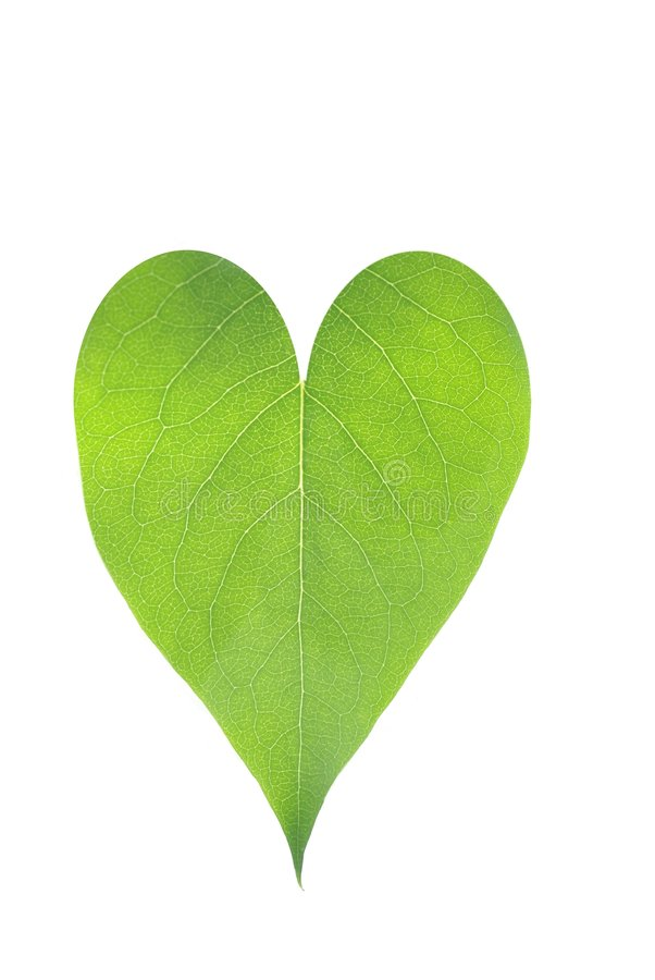 Free Heart From Leaf Royalty Free Stock Images - 9311829