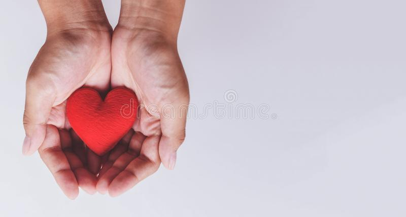 Heart on hand for philanthropy / woman holding red heart in hands for valentines day or donate help give love warmth take care stock photo