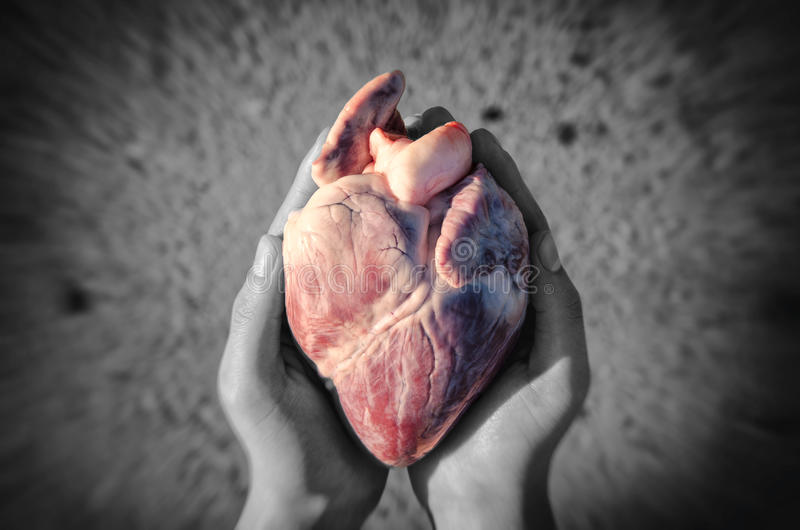 Heart in hands royalty free stock photos