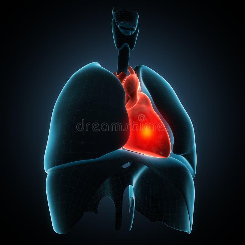 Heart human disease illustration vector illustration