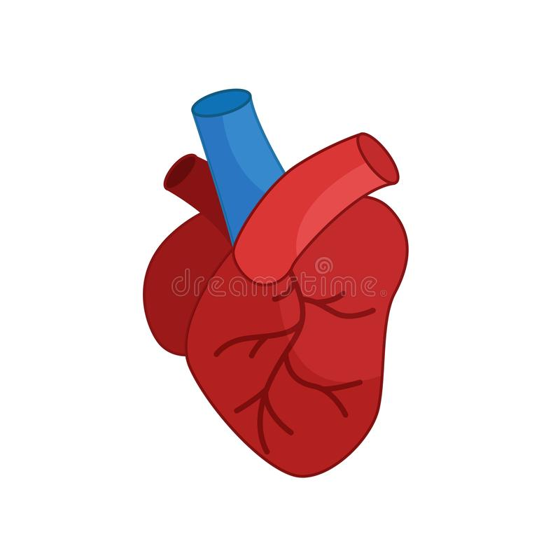 Heart icon. In cartoon style on a white background royalty free illustration