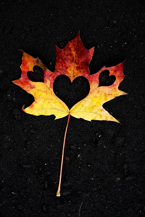 Heart inside of maple leaf on black stock photography