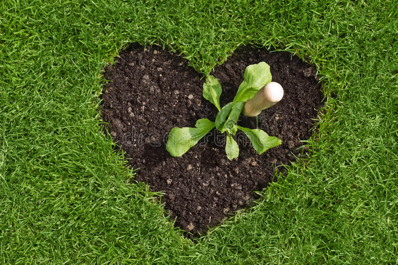 Download Heart In The Lawn With Plant And Trowel Stock Photo - Image: 24447710