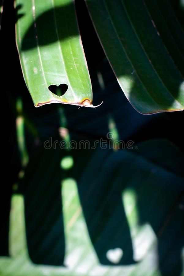 HEART LEITMOTIF 06 royalty free stock photo