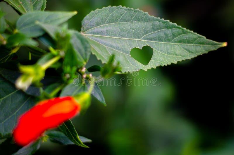 HEART LEITMOTIF 03 stock photography