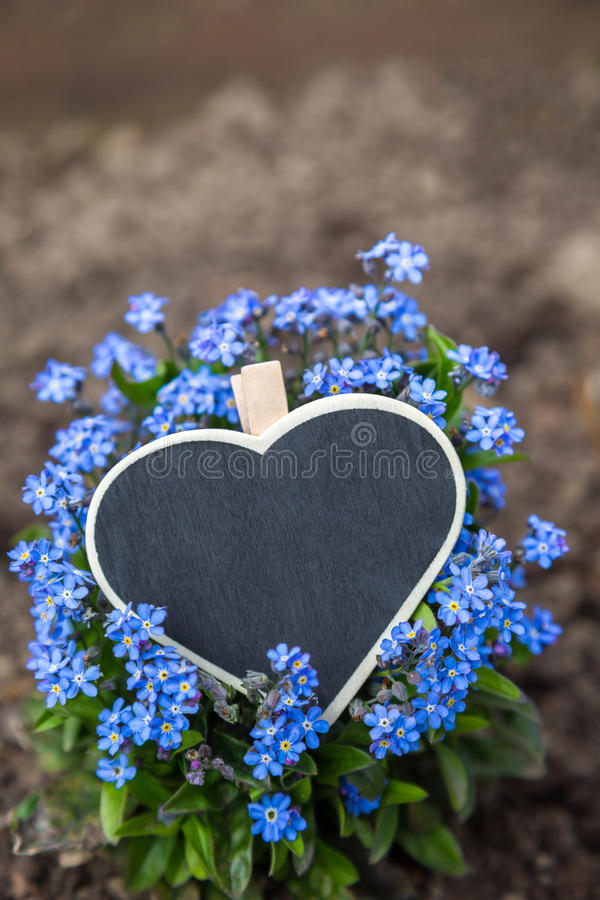 A heart lies on blue forget-me-not stock image