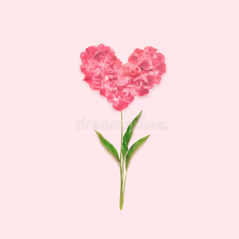 Heart made of flower petals. Red petals heart over pink background. Top view. Love and romantic theme. royalty free stock photography