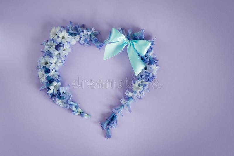 Heart made from hyacinths blossoms and mint bow on purple background. royalty free stock photography