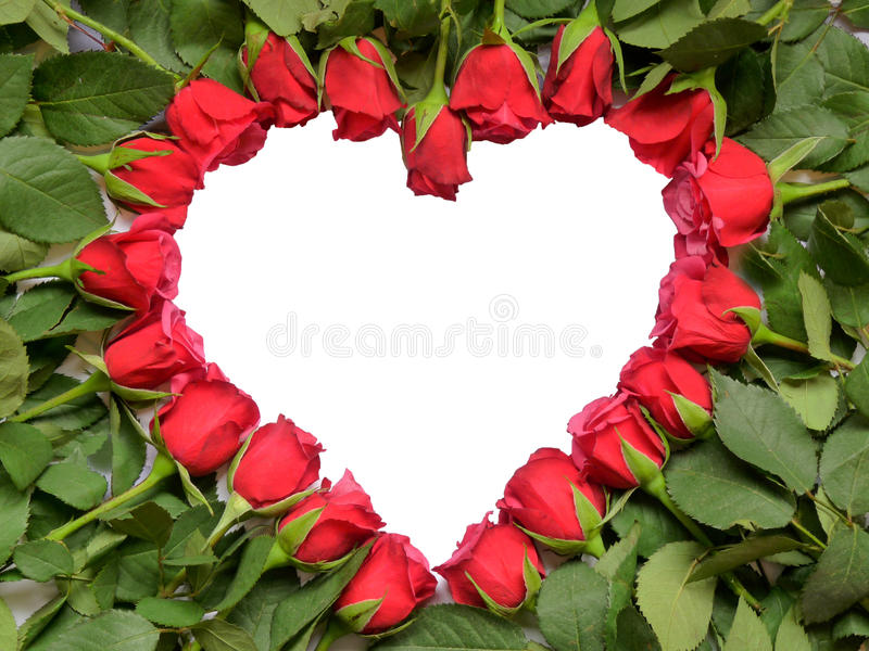 Heart made of red roses with stem. Red roses with stem form a symbolic heart, lying on a white background stock photos