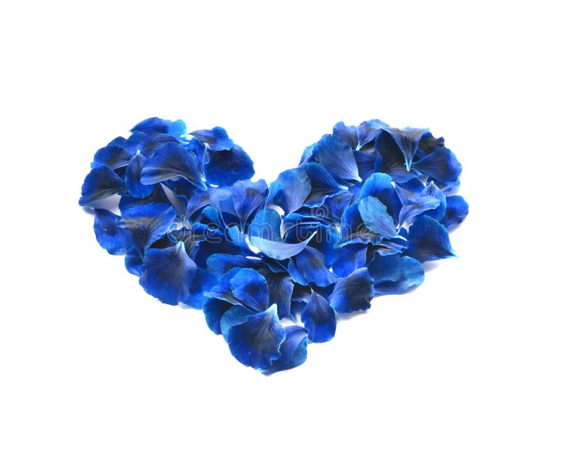 Heart made of rose petals. Blue rose petals heart over white background. Top view with copy space for your text. Love and romantic royalty free stock photo