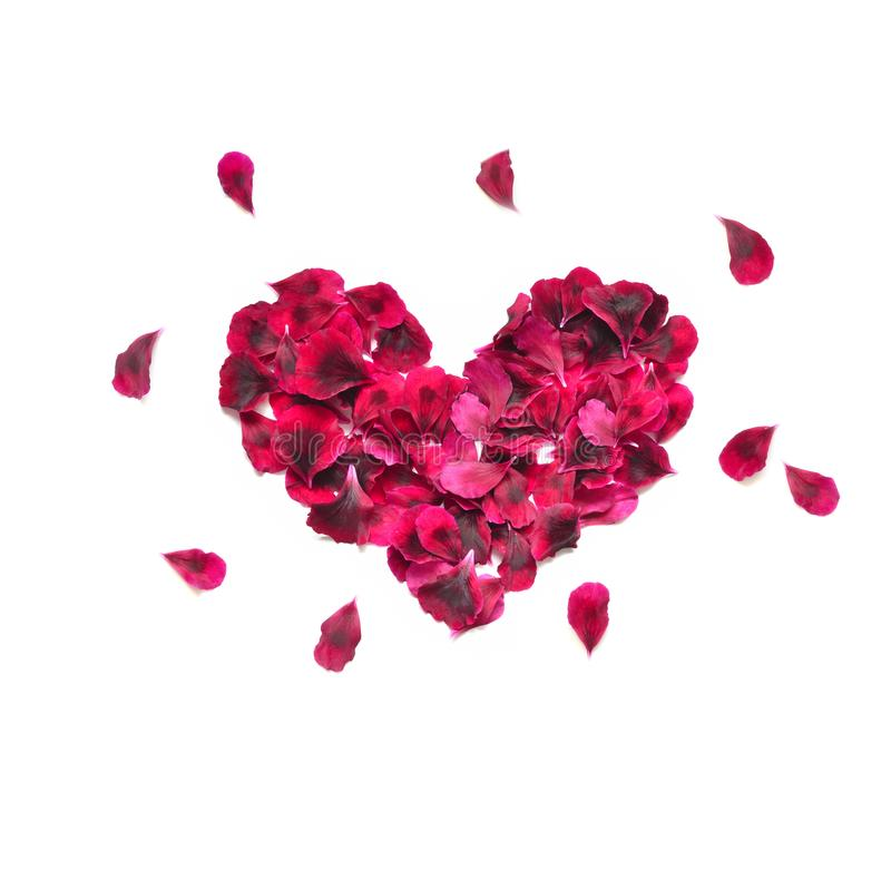 Heart made of rose petals. Red rose petals heart over white background. Top view with copy space for your text. Love and romantic royalty free stock photography