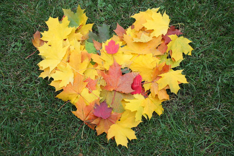 Heart from maple leaves royalty free stock photos