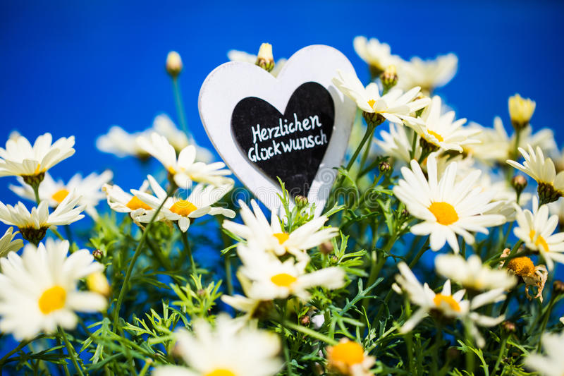 Heart with Margeriten, text,. `Congratulations`, blue Background stock images