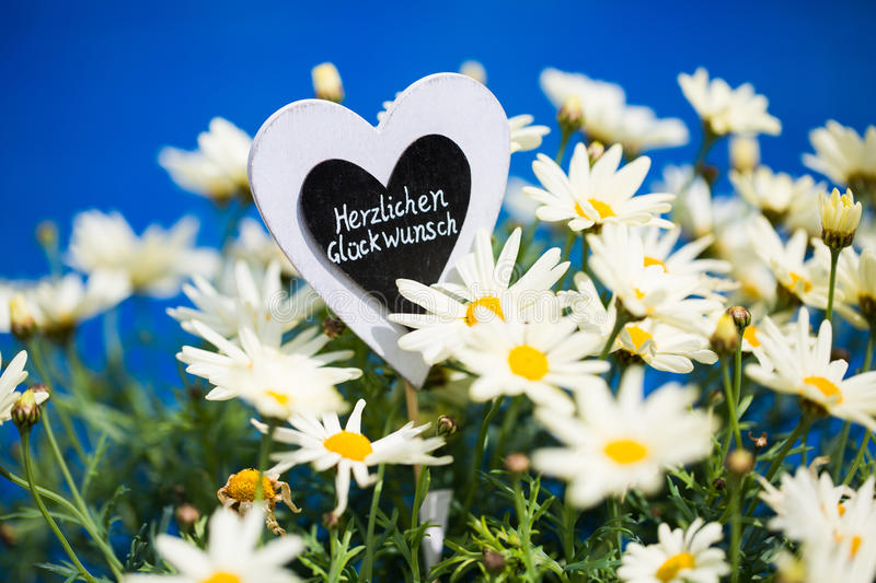 Heart with Margeriten, text,. `Congratulations`, blue Background stock image