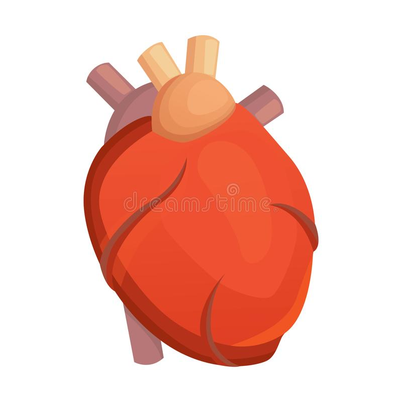 Heart Medical Science Vector Illustration Flat Human Anatomy Stock