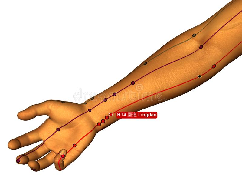 Acupuncture Point HT4 Lingdao, 3D Illustration, White Background royalty free stock images
