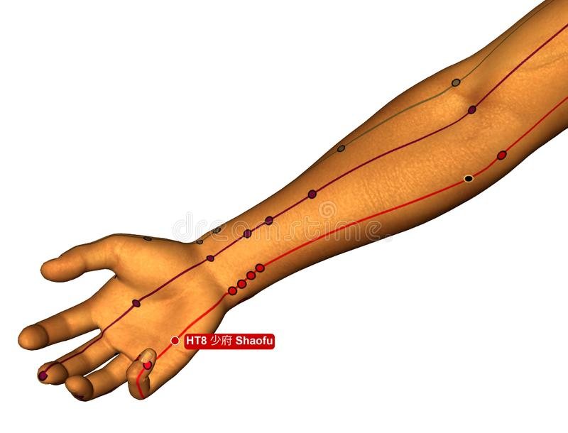 Acupuncture Point HT8 Shaofu, 3D Illustration, White Background royalty free stock images