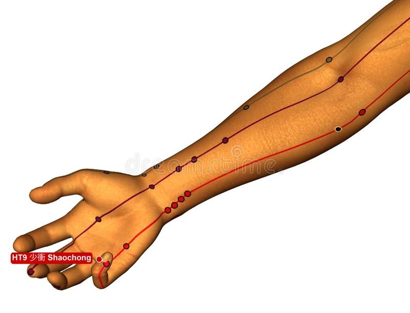 Acupuncture Point HT9 Shaochong, 3D Illustration, White Background stock images
