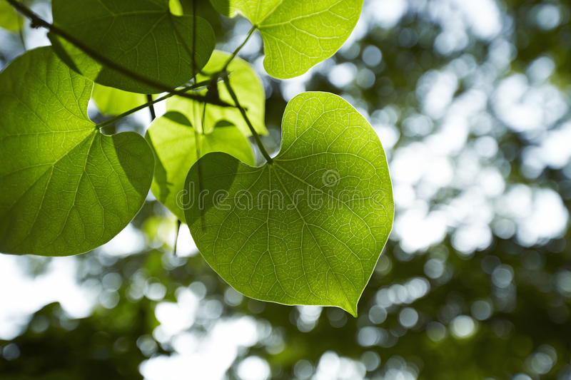 Heart in nature royalty free stock photography