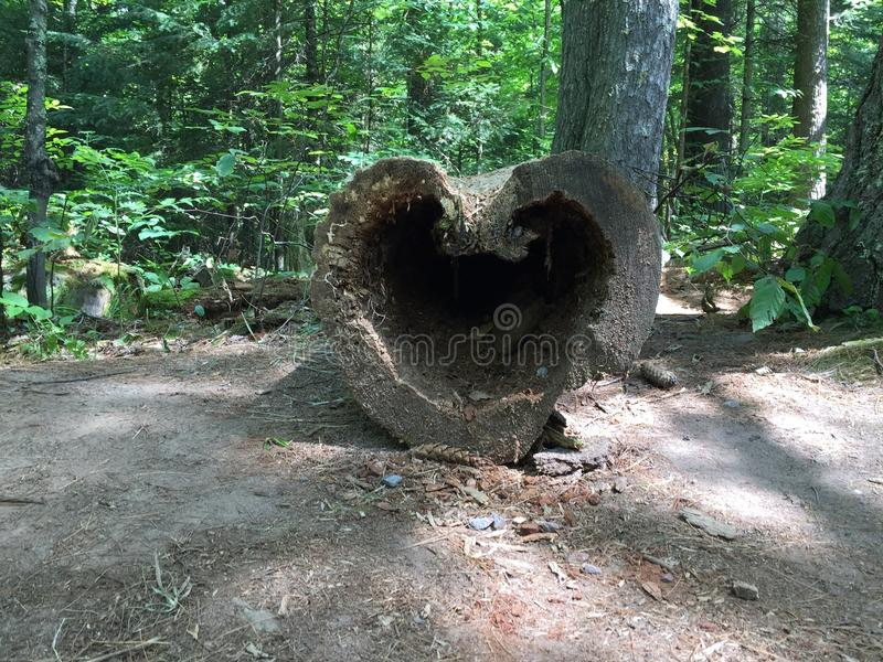 The heart of nature royalty free stock image