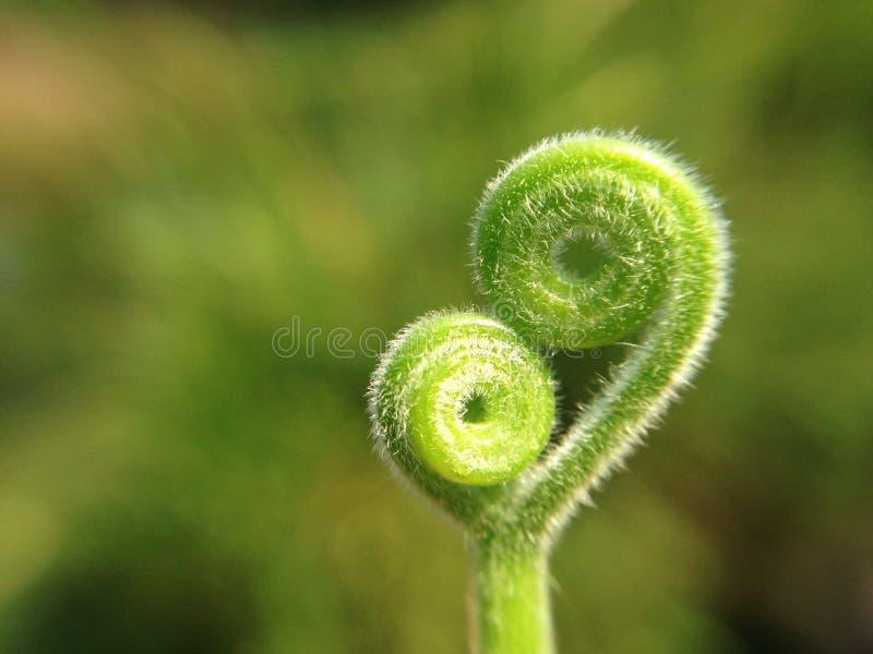 Heart. Nature macro stock photo