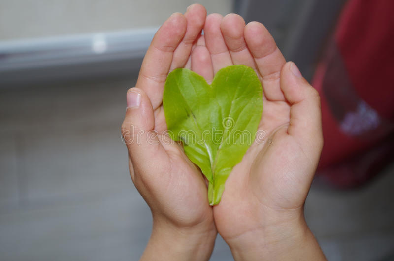 The heart of nature. royalty free stock photography