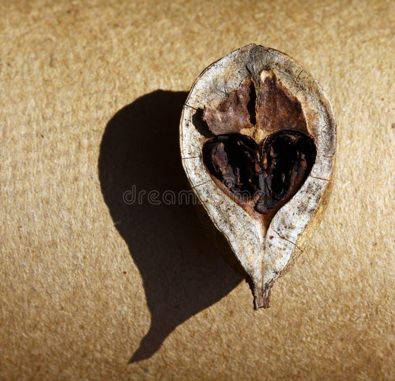 Heart of a nut. stock photos