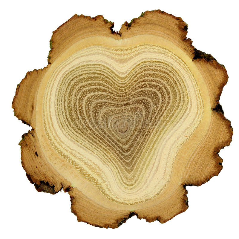 Free Heart Of Tree - Growth Rings Of Acacia Tree - Cros Stock Image - 24466391