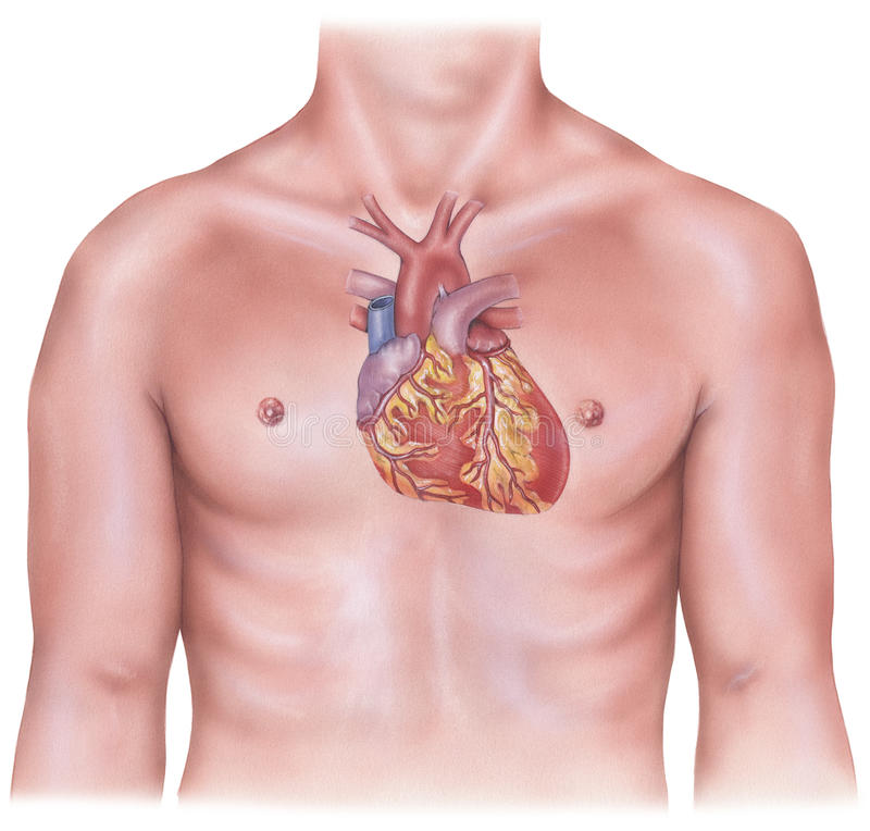 Heart - Overlaid on Male Torso. Shown is a heart in context overlaid on a male torso royalty free stock photo