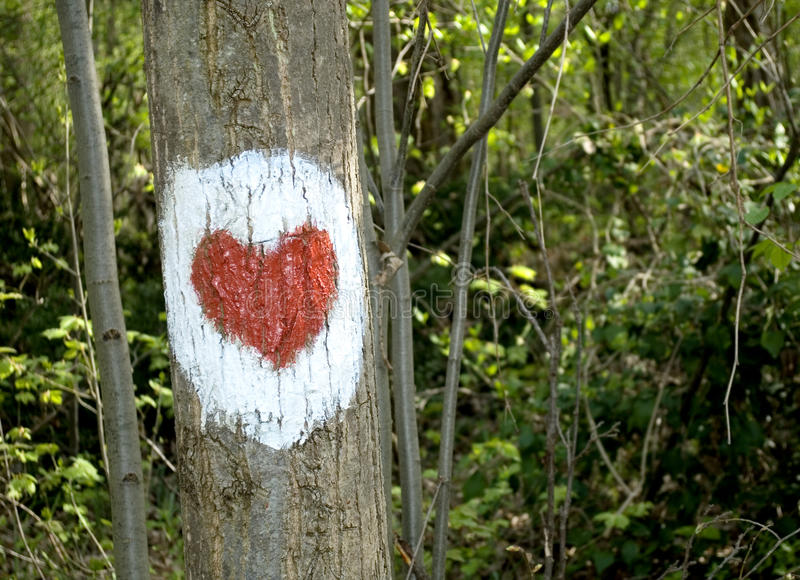 Heart painted on tree trunk, health path symbol in scenic deciduous forest with spring Sun casting its warm rays trough royalty free stock image