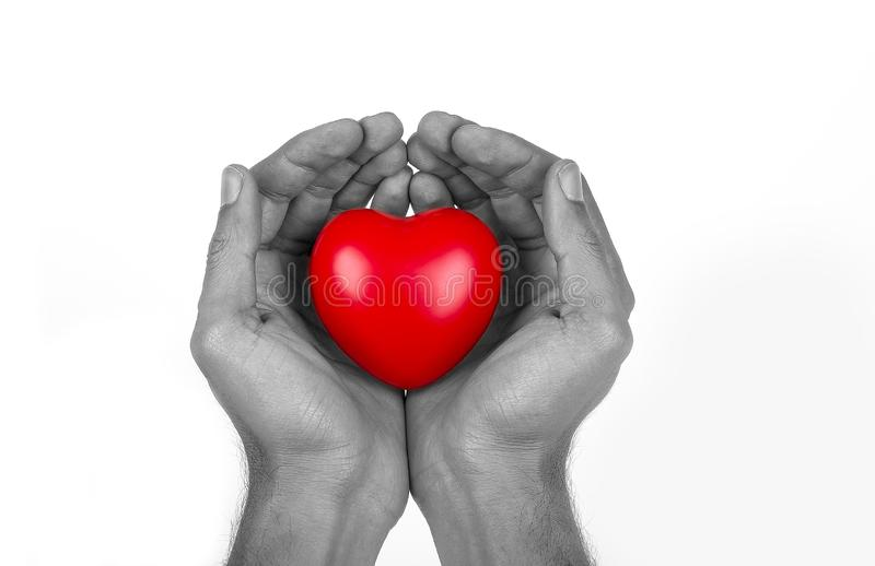 heart in the palm of hand, royalty free stock photo