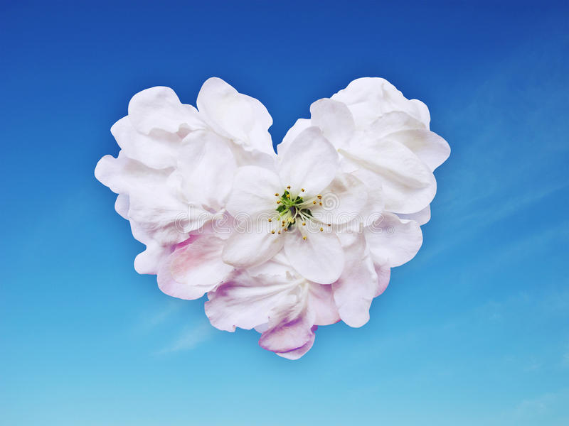Download Heart from petals stock image. Image of postal, sign - 19487805