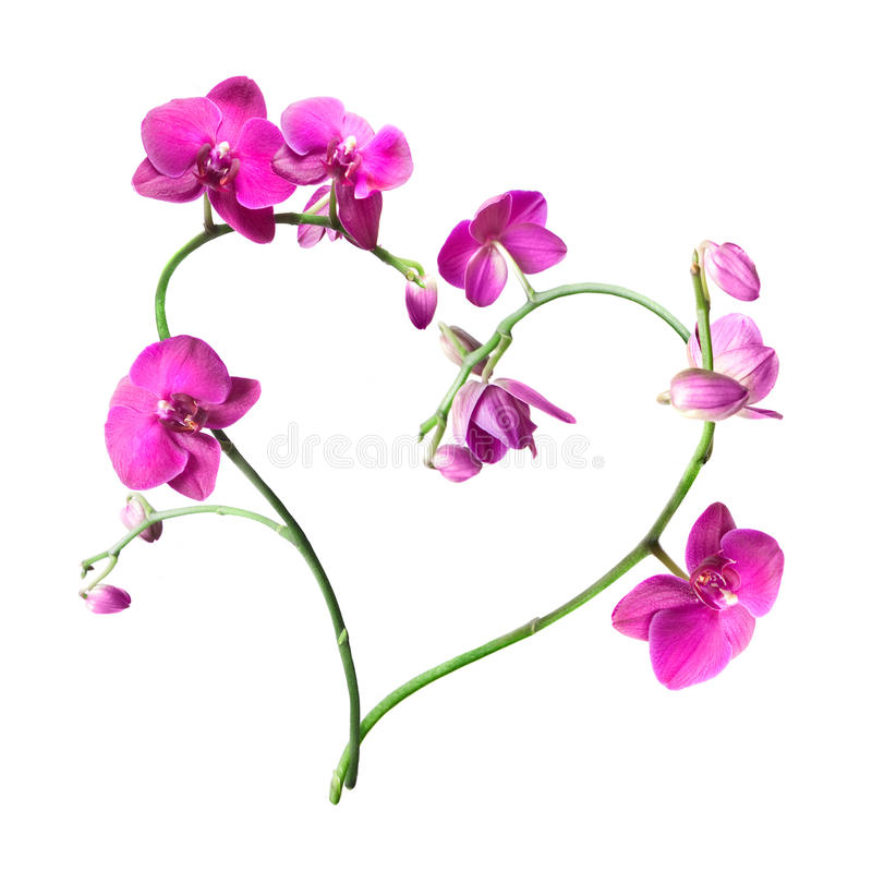 Heart from pink orchids isolated stock photo