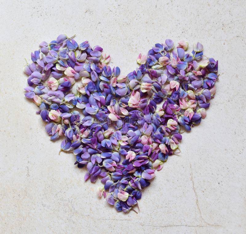 Heart of pink and purple lupine flowers. Birthday, Mother`s day, Valentine`s Day, March 8, Wedding card or invitation. Festive stock image